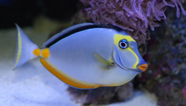 How to Fish Saltwater Fish