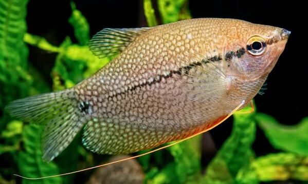 How to Fish Freshwater Fish